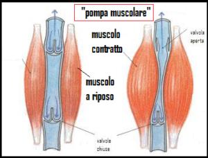 pompa muscolare
