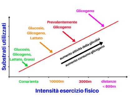 consumo glicogeno