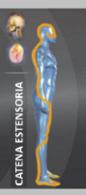 catena-estensoria-rimpicciolita