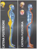 catena-flessoria-posteriore-ripicciolite
