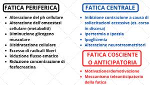 fatica metabolismi energetici